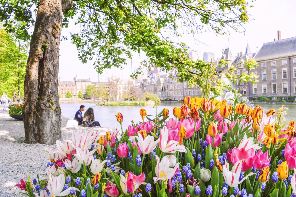 Spring season in Den Haag, the Netherlands