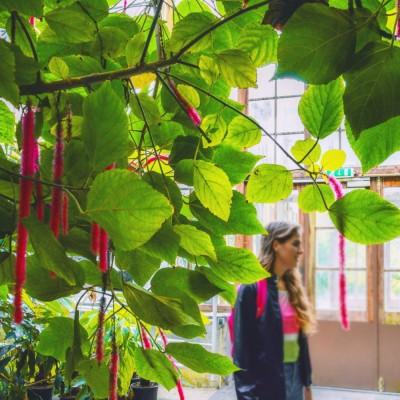 Hortus in Leiden