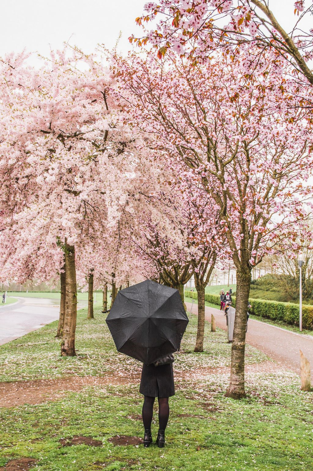 A woman with a black umbrella stands amidst the blossoming trees.