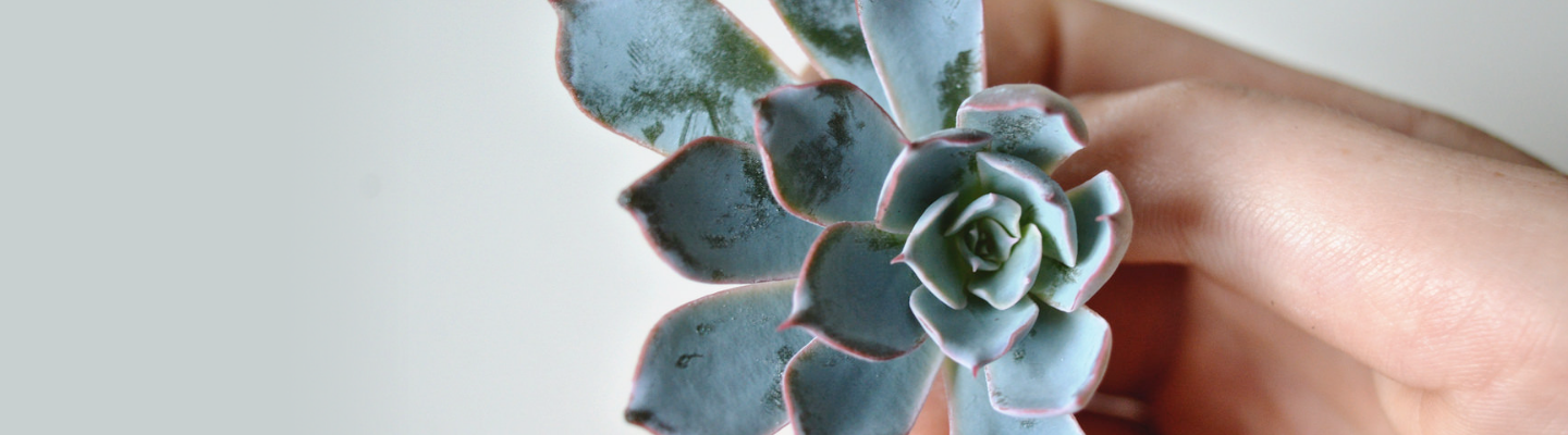 Making New Plants: How to Propagate Succulents