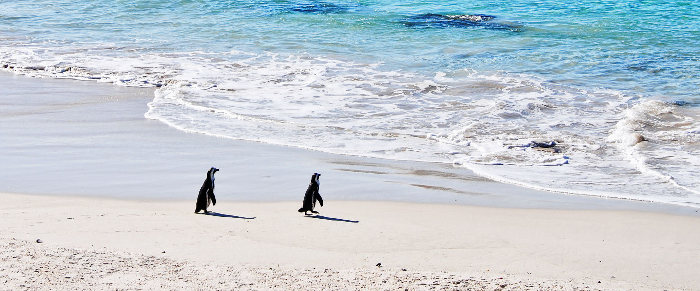 Unique South Africa: Meeting the Boulders Beach Penguins