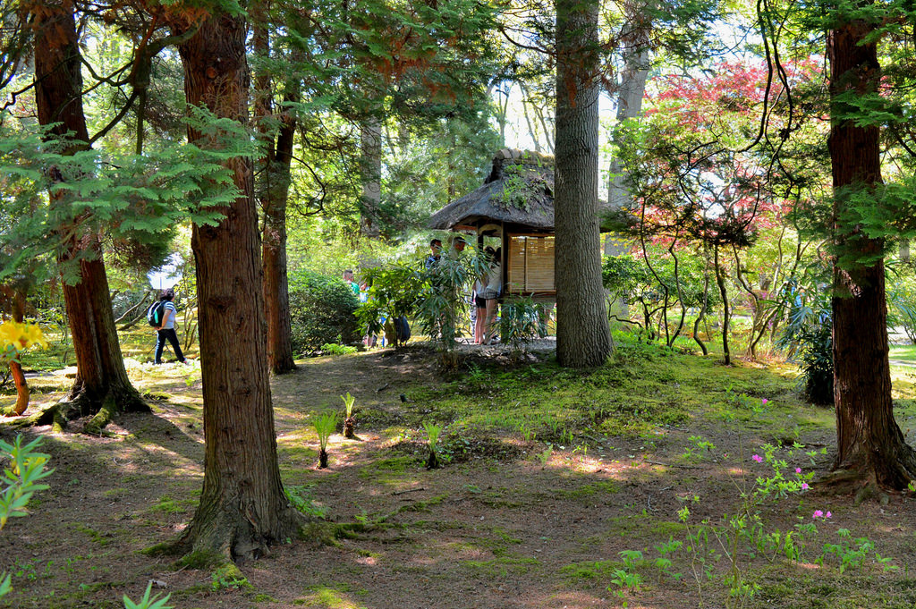 Trees in the Den Haag Japanese Garden