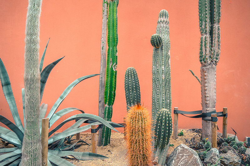 Cacti at the Hortus Botanicus in Amsterdam