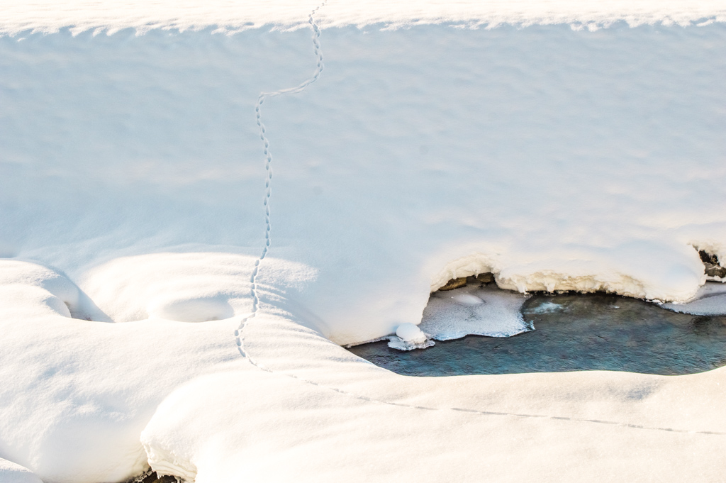 Animal tracks in Hohe Tauern National Park