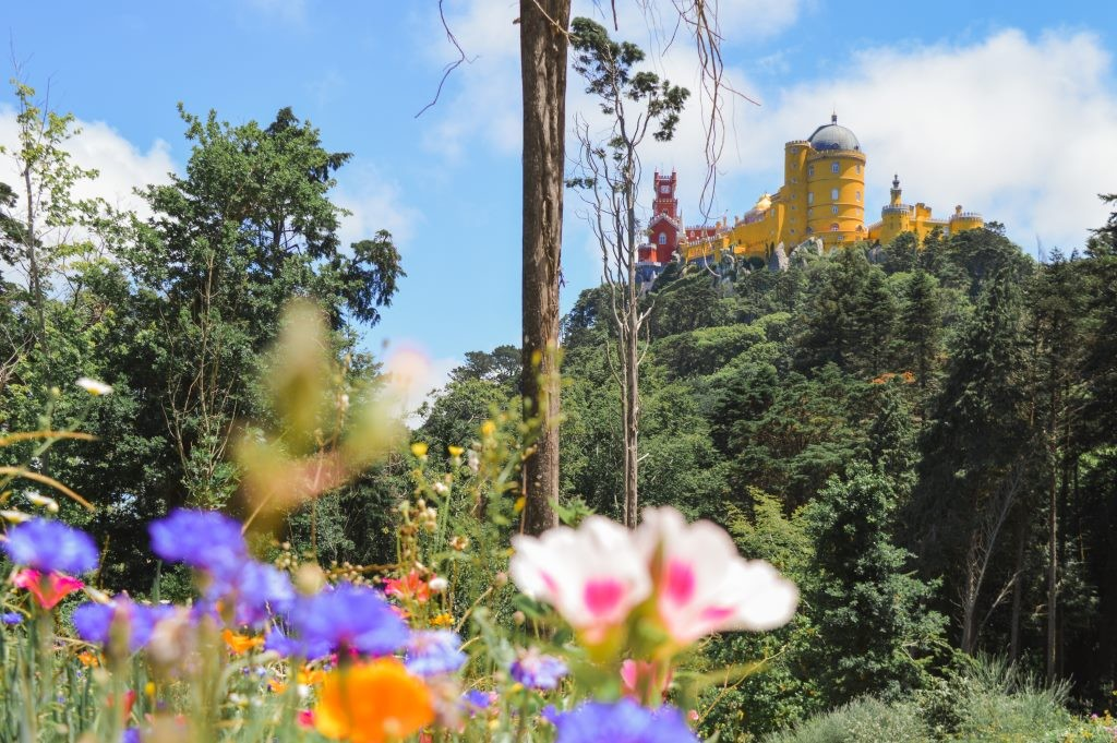 Flowers in Pena Park, with a towering Pena Palace in the background.