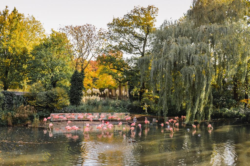 Flamingos at Artis Zoo in Amsterdam