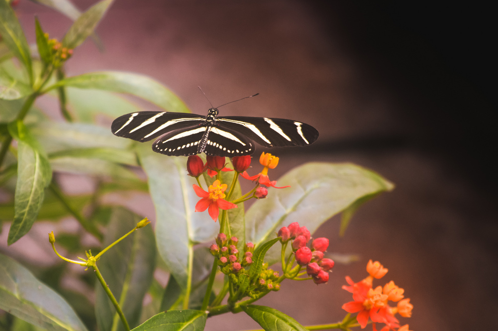A butterfly at the Hortus Botanicus Amsterdam