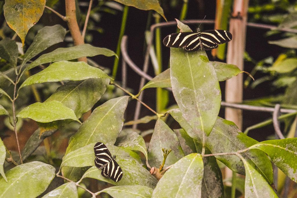 Butterflies at the botanical garden in Amsterdam