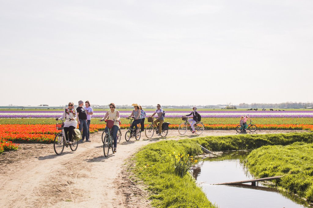 Cycling to the flower fields in Holland