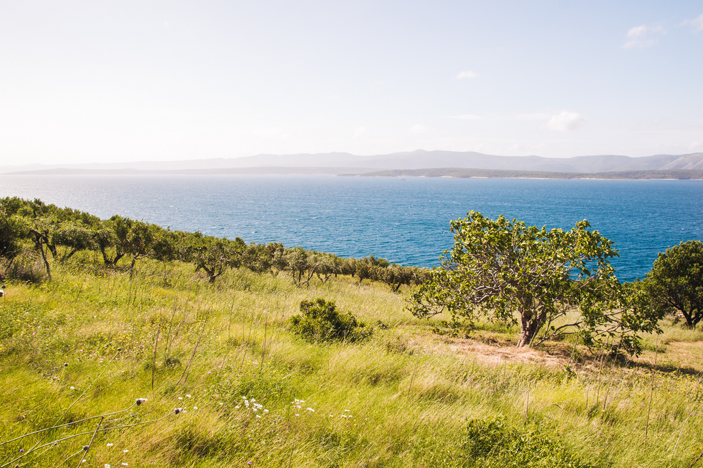 The green meadows on the Dalmatian Island of Brac