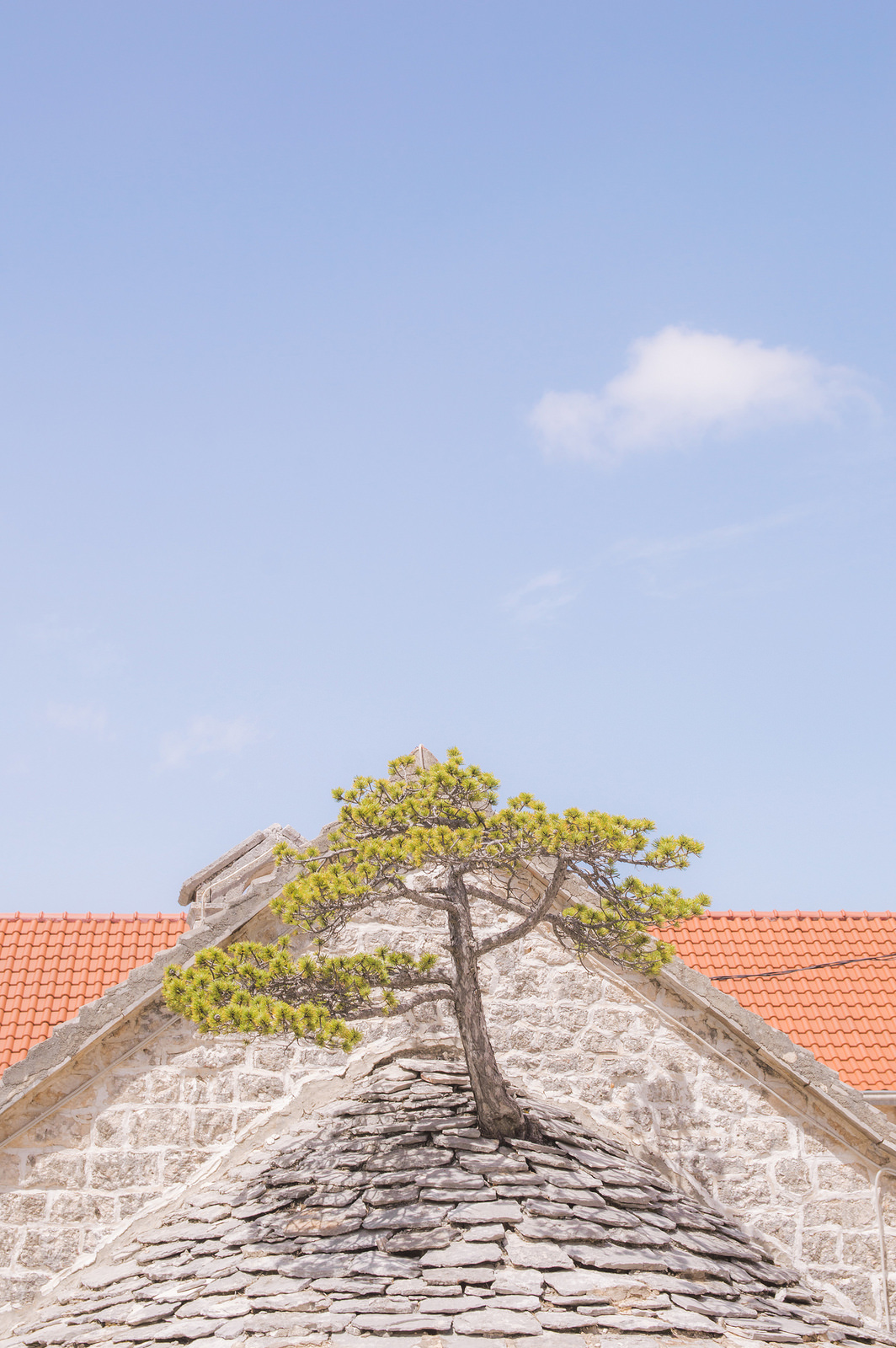A tree grows right through the roof of an old chapel