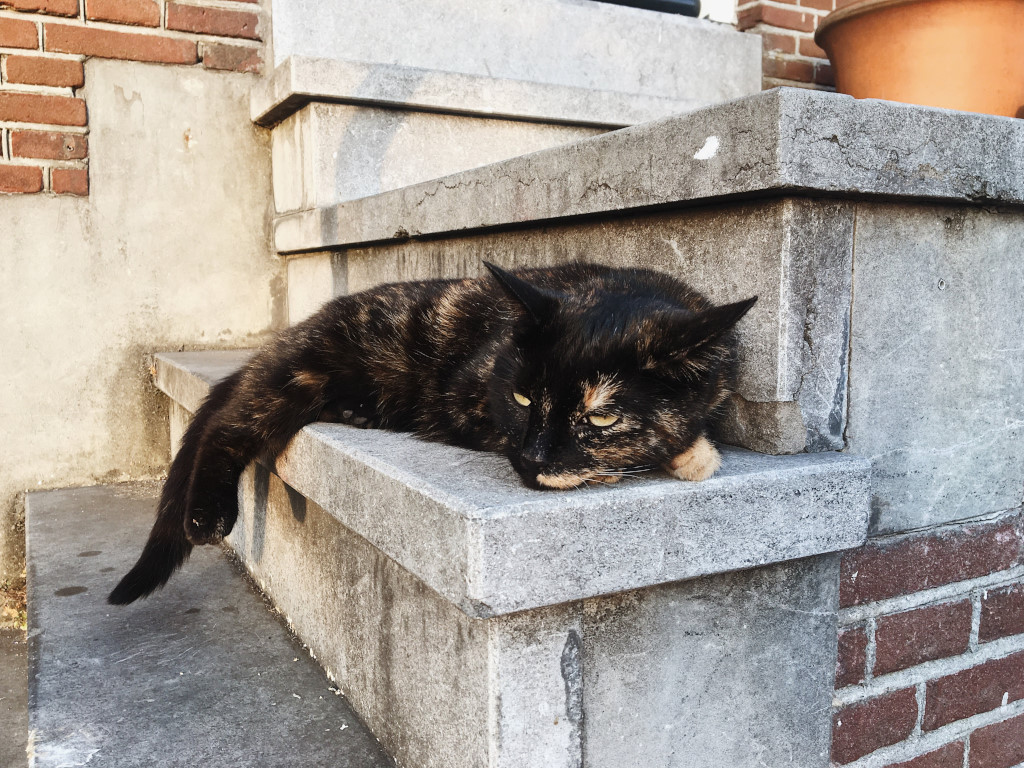 A cat rests on the steps that lead to an Amsterdam doorway