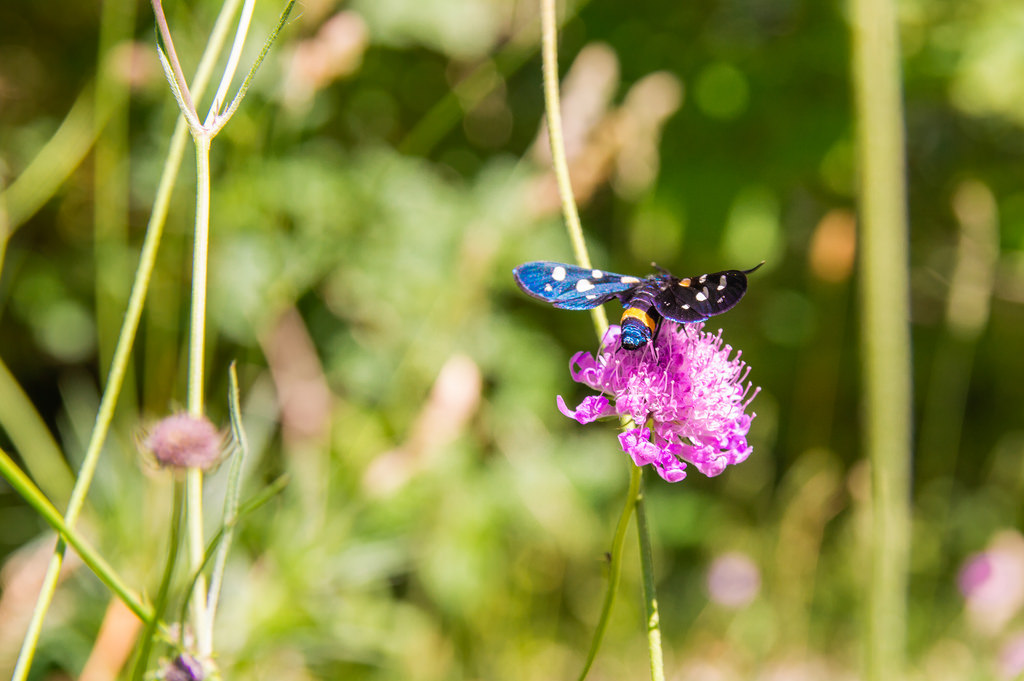 A butterfly on a flower on Monte Cucco, Umbria.