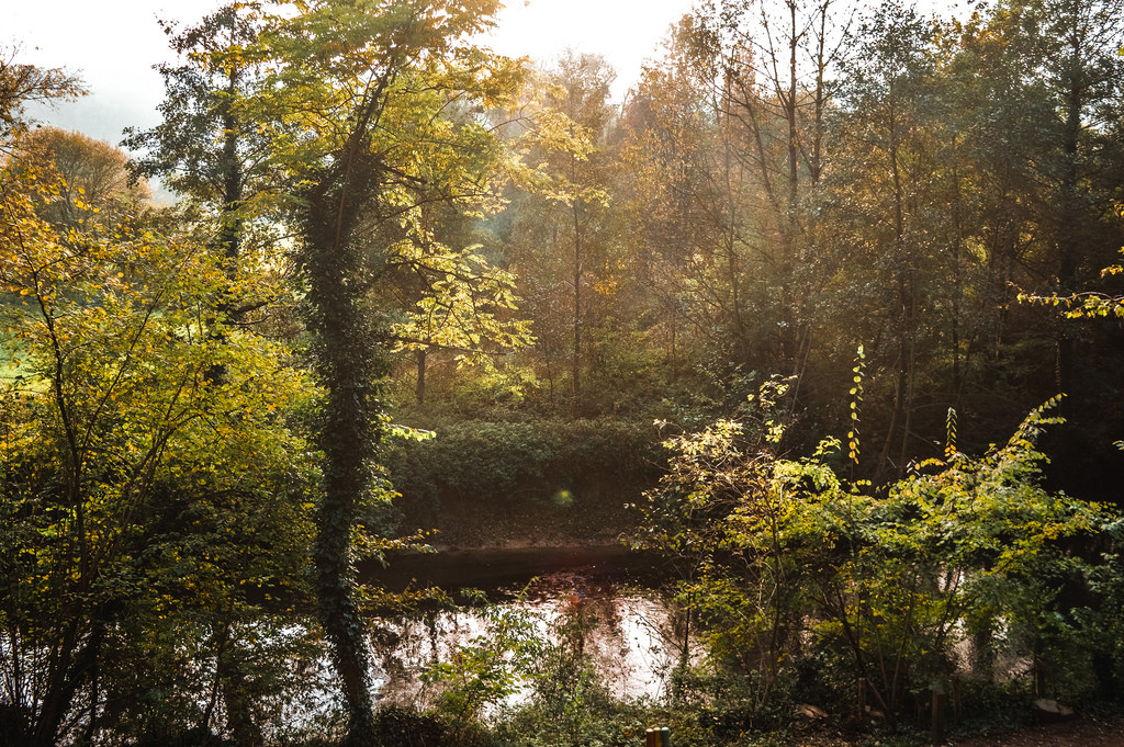 Nature in Valkenburg, Limburg