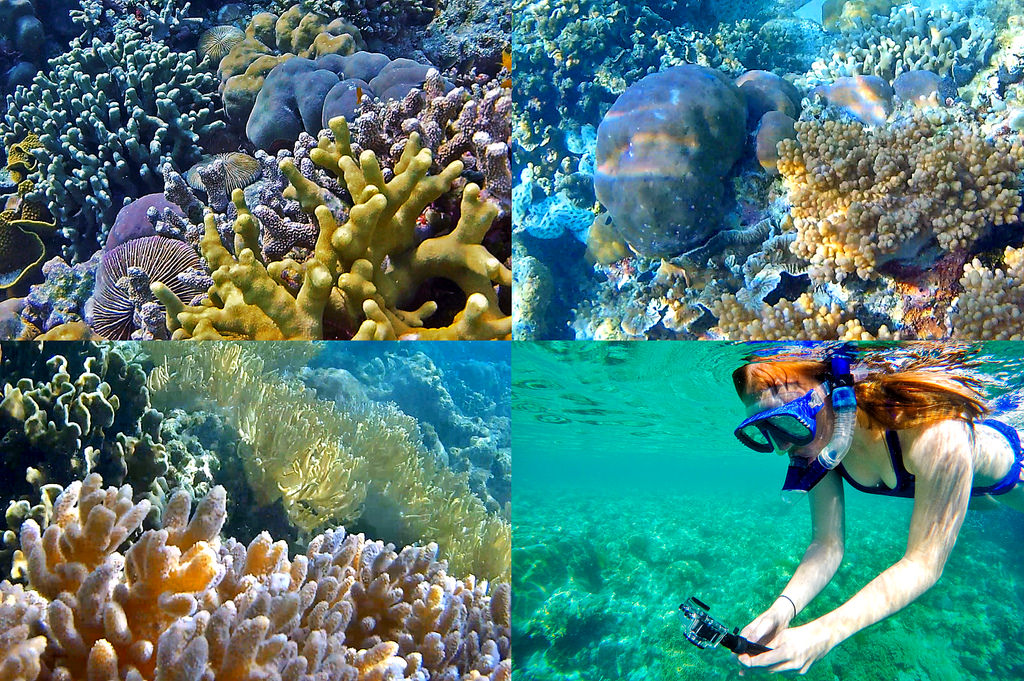 Snorkelling in Wakatobi National Park