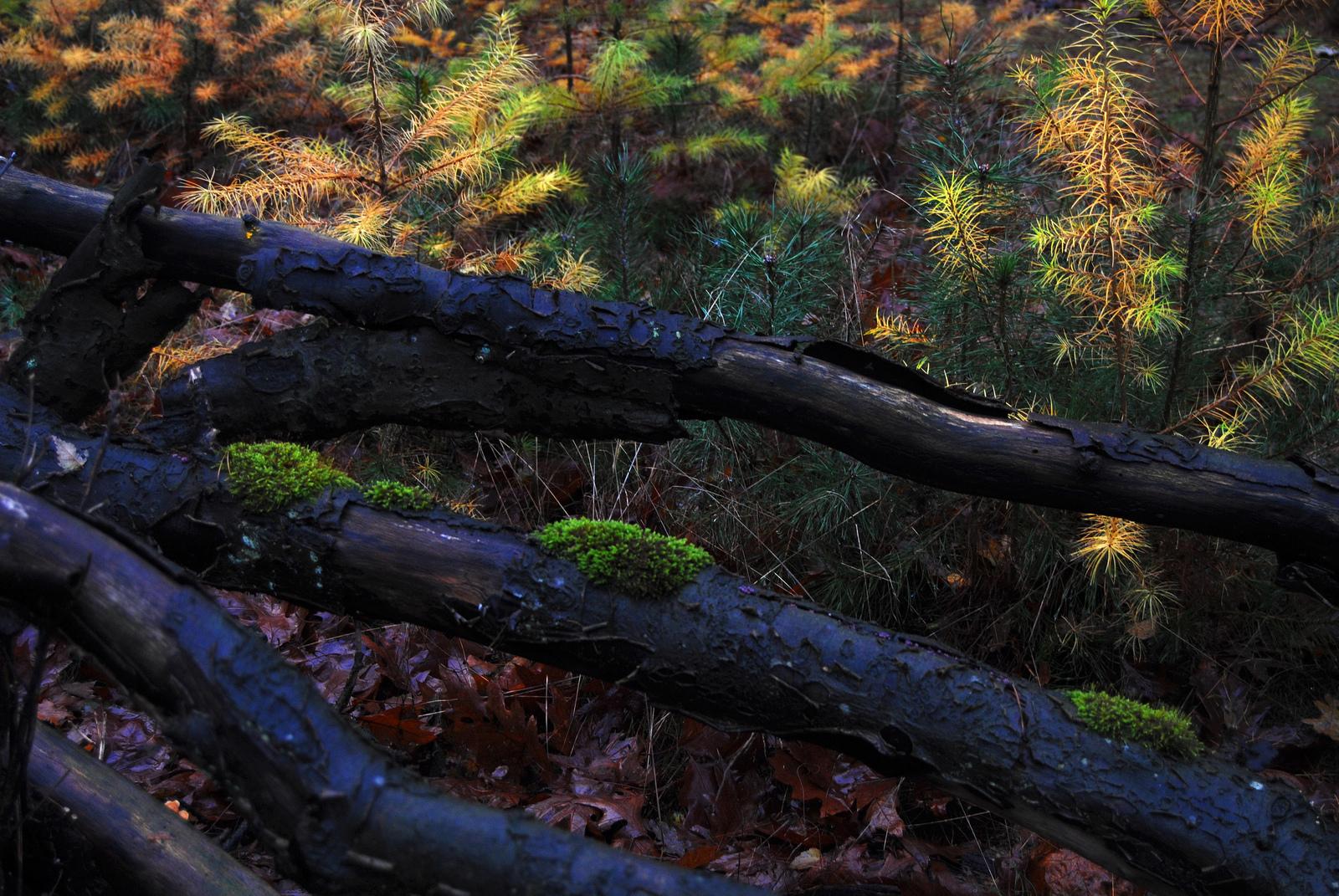 The forest floor at the Utrechtse Heuvelrug