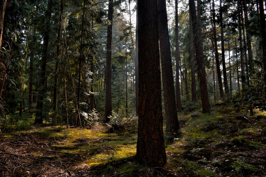 Trees form a shadowy forest at the Utrechtse Heuvelrug National Park