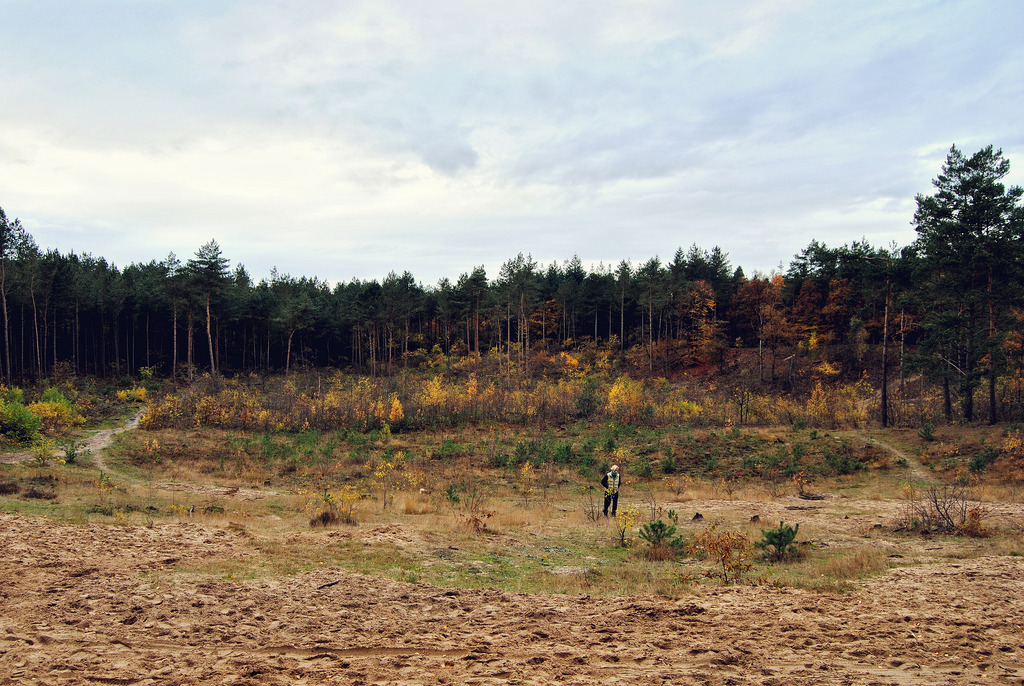 Open landscape, lined with trees (Utrechtse Heuvelrug National Park)