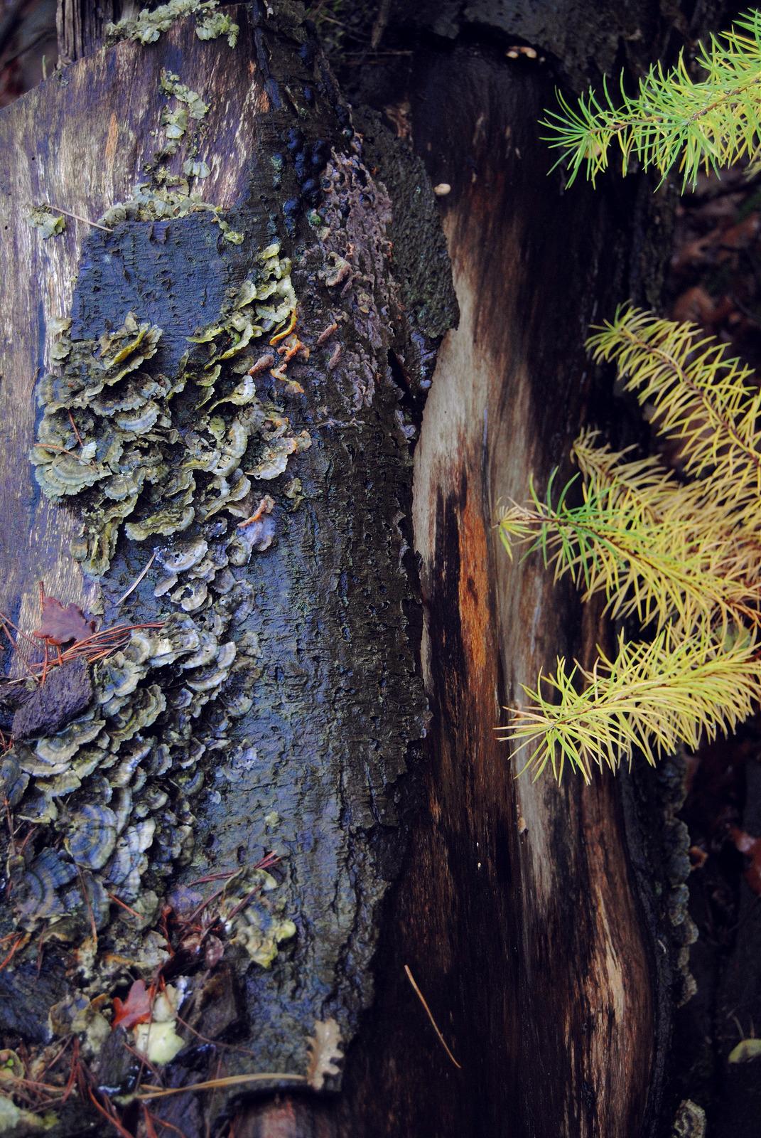 Fungus grows on a fallen tree