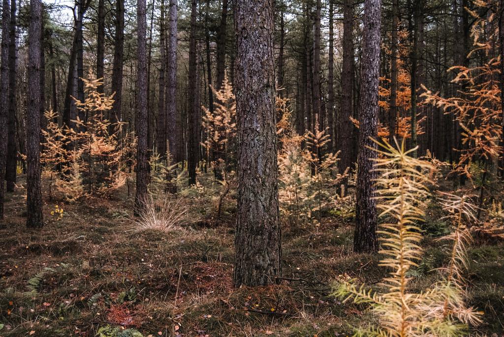 Woods at the Utrechtse Heuvelrug National Park