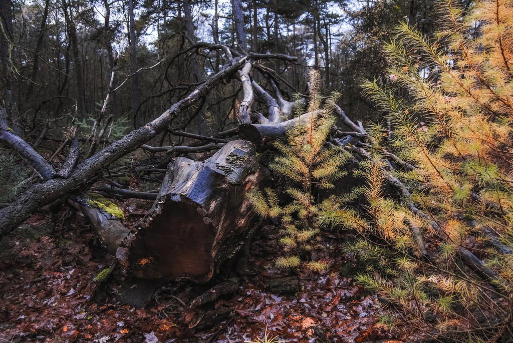 An autumn scene in a forest at Utrechtse Heuvelrug National Park