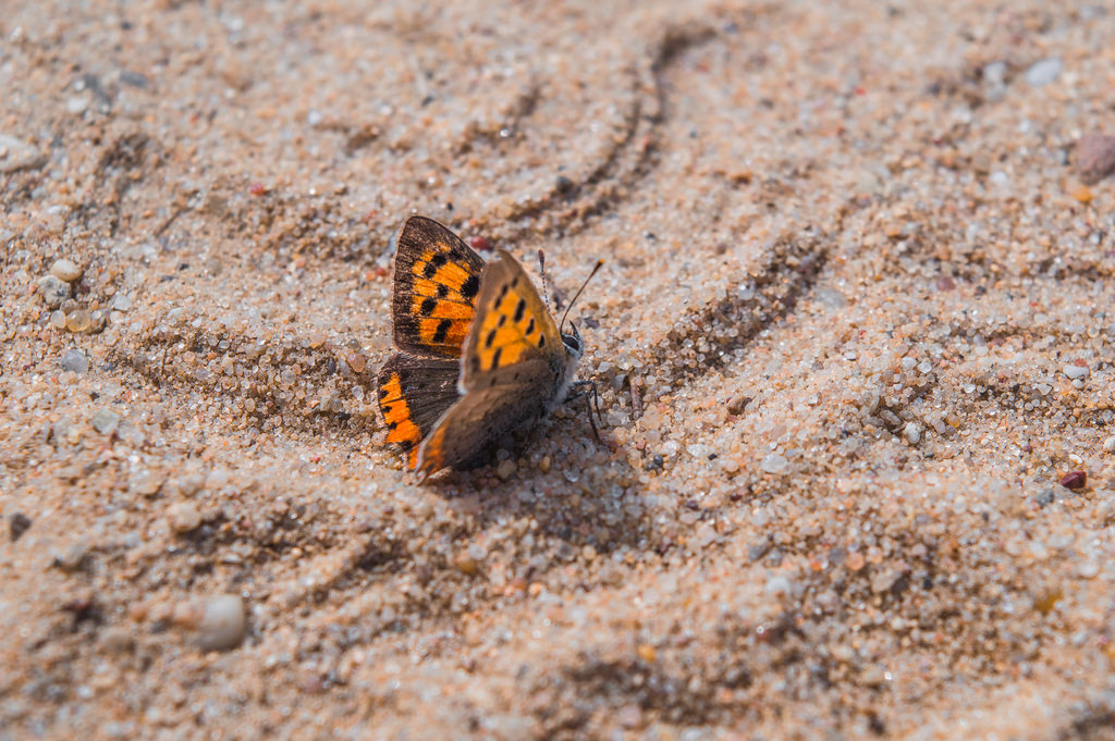 A butterfly rests in the golden sand