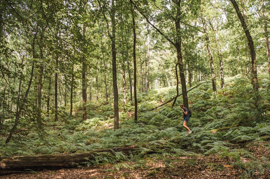 A young woman climbs on fallen trees in the Veluwe forest.