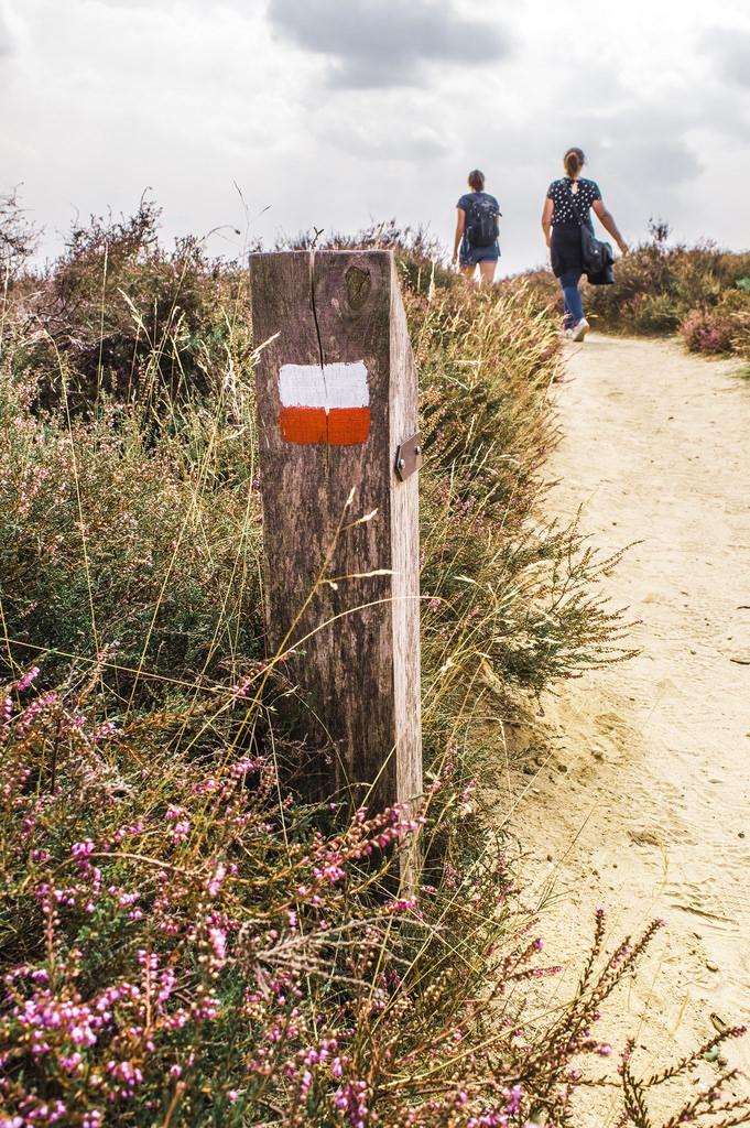 Hiking trail at Veluwezoom National Park