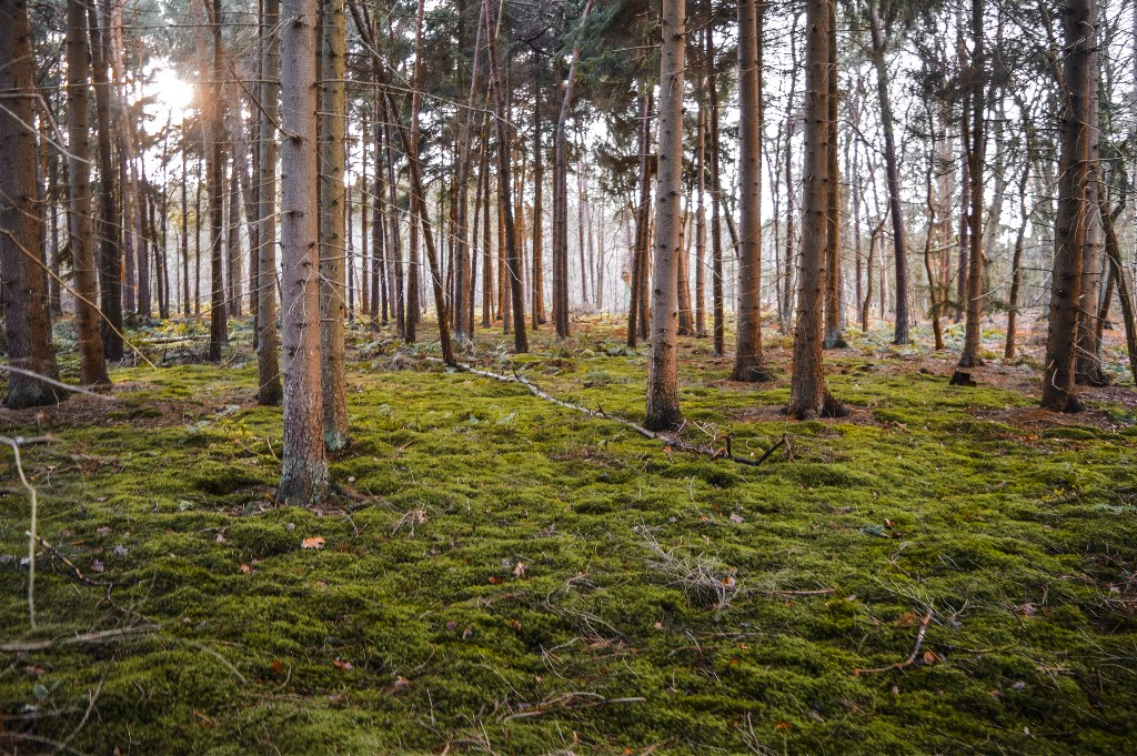 A green forest during golden hour.