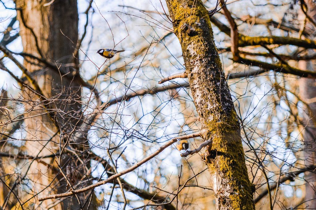 Birds resting on a tree branch in a forest.