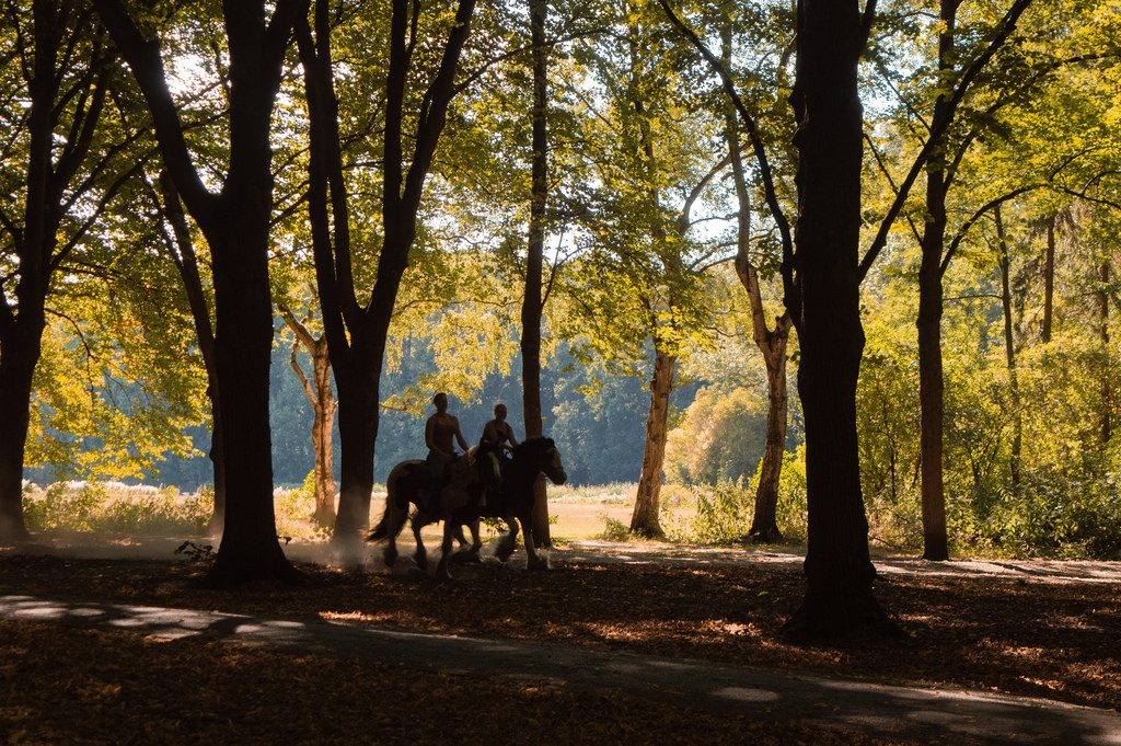 Two riders on horses gallop through the sunny forest.
