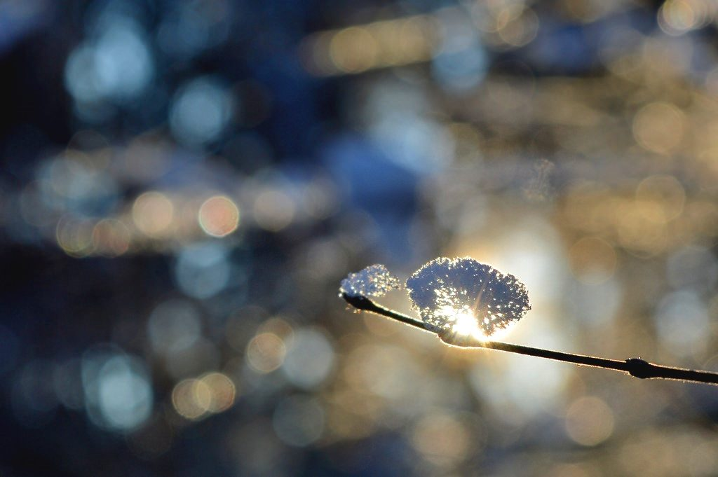 A little bit of snow on a twig sparkles in the sunshine.