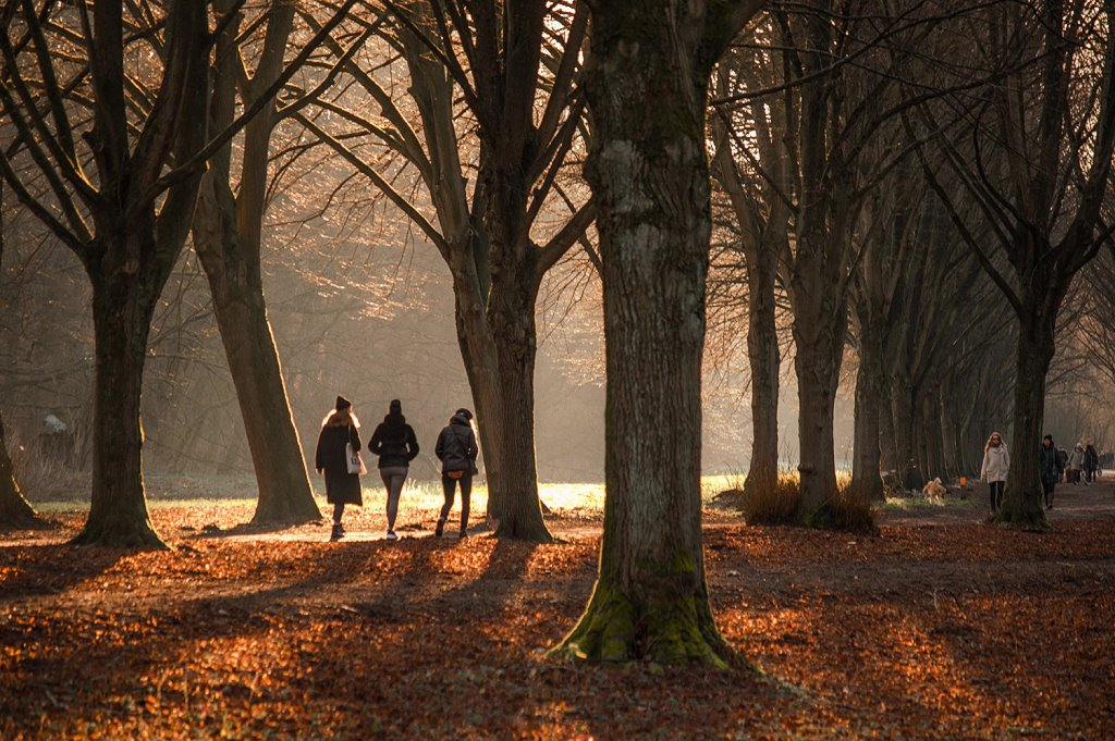 Amsterdamse Bos in winter, one of the most beautiful forests in the Netherlands