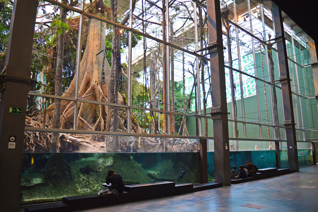 CosmoCaixa: A Little Piece of Rainforest in Barcelona