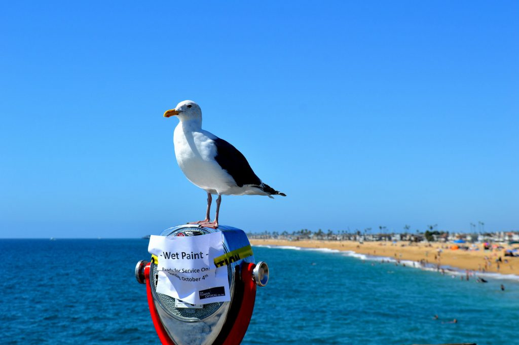Huntington Beach in California: a sea gull rests on a newly painted look-out point.
