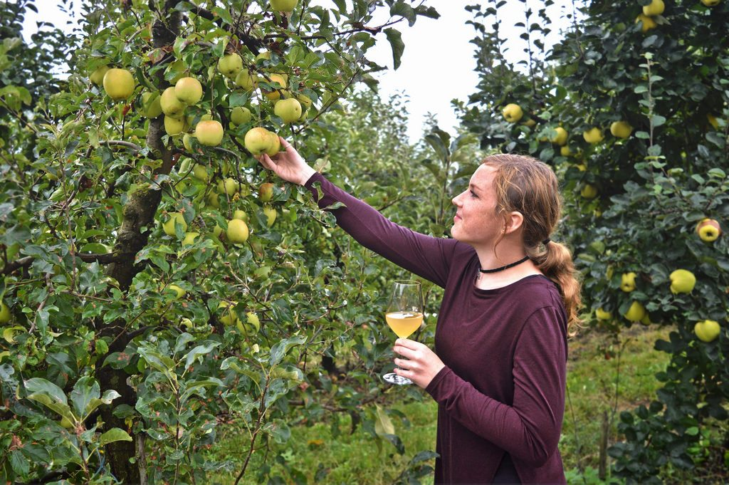 Me posing in a vineyard, holding a glass of apple juice and pretending to pick an apple.