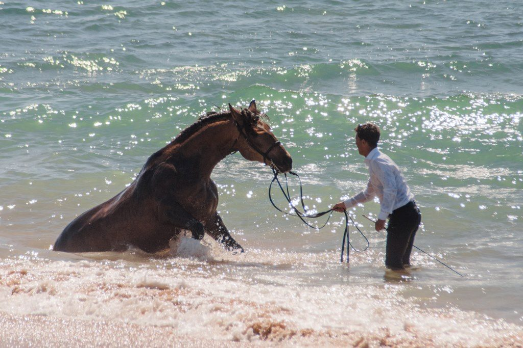 An Andalusian horse called Guapo takes a dip into the ocean for the first time.