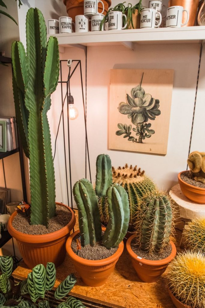 Fleur de Lies is a florist and plant shop in Ostend that sells, among other things, cacti
