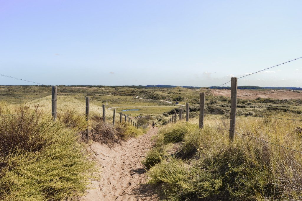 The dunes near Zandvoort
