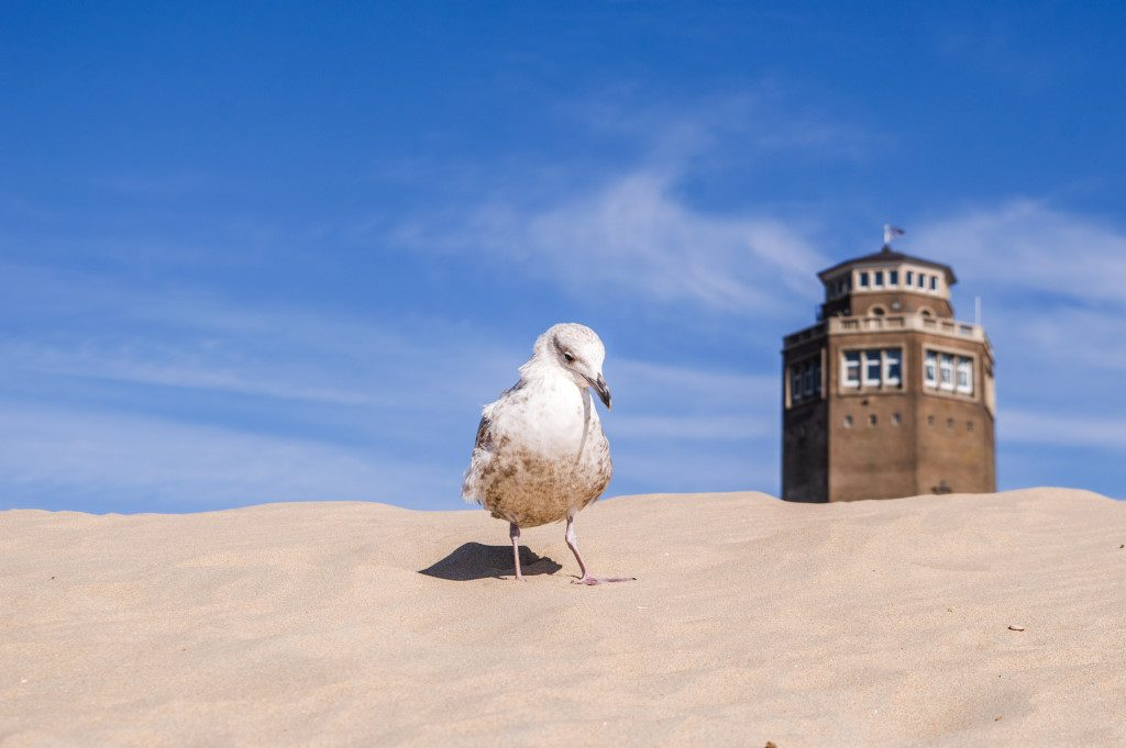 Ignore the seagulls when you're on your day trip from Amsterdam to the Beach in Zandvoort