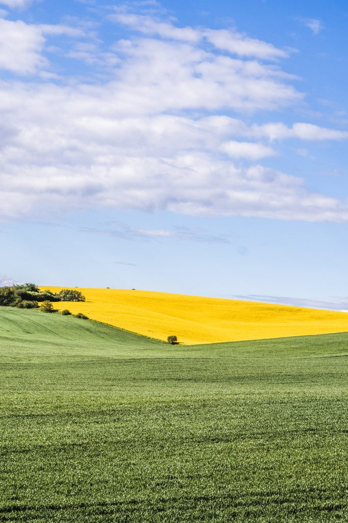 A green and yellow landscape in Moravian Tuscany