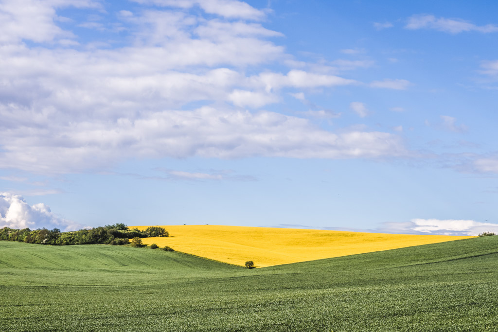 A green and yellow landscape in Moravian Tuscany with a blue sky