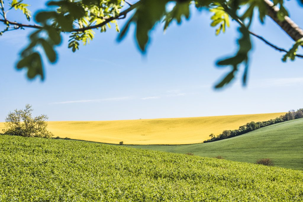 The landscape in Moravian Tuscany on a sunny day in spring
