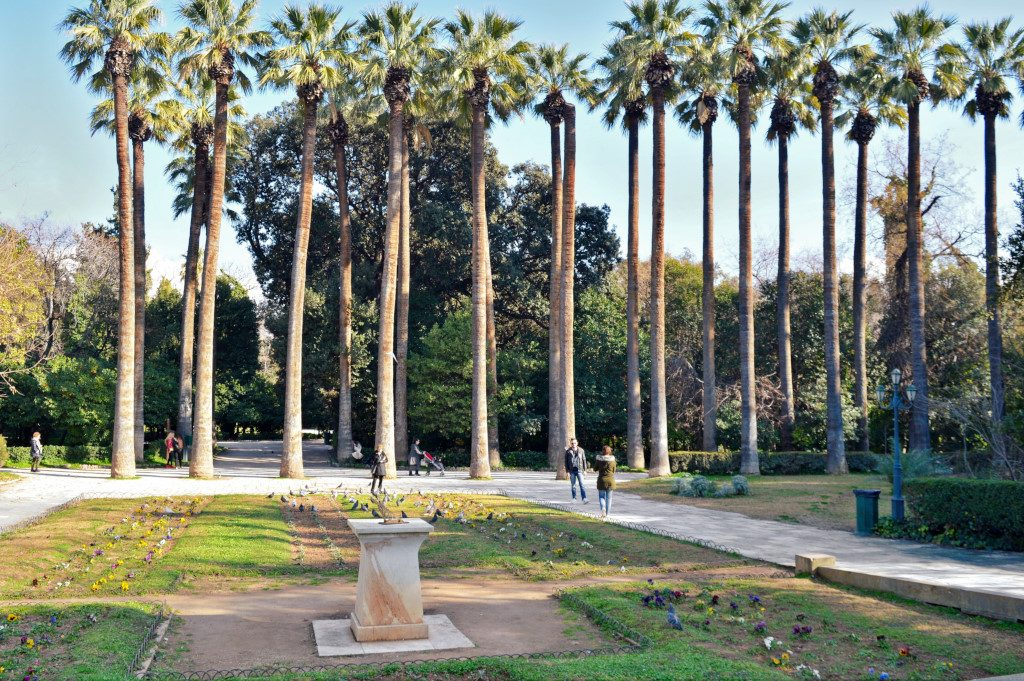 A row of tall palm trees in the National Garden of Athens