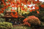 The Japanese Garden in The Hague, Holland in autumn